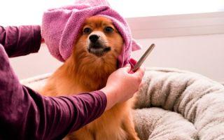 Как вычесывать шерсть у собаки