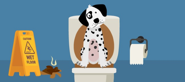 нарушение стула у собаки