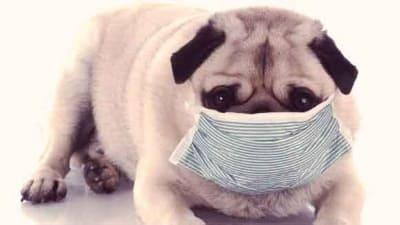 Dog-Disease