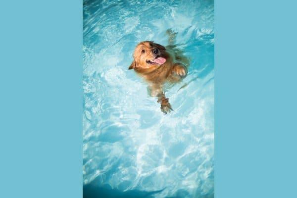 собака в бассейне