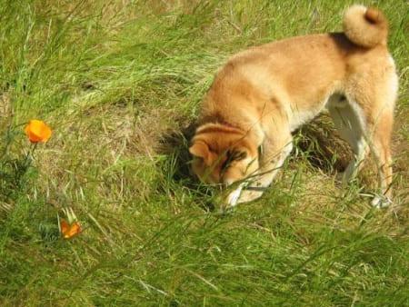 собака ест экскременты