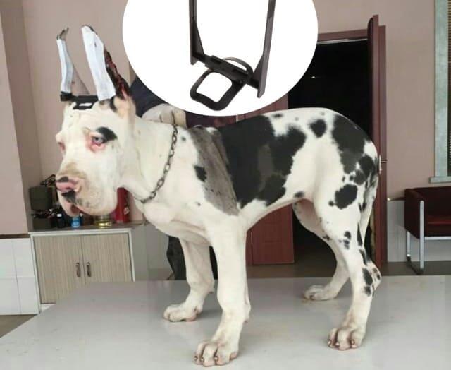 каркас для ушей собаки