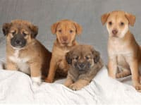 puppies-cropped